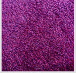 Quality carpet and underlay for sale