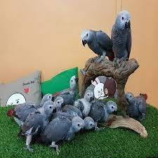 wide species of birds and parrots available for sale.